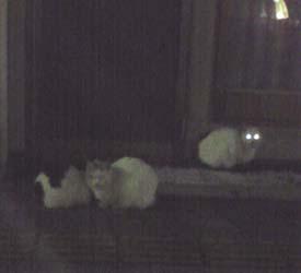 200124cats